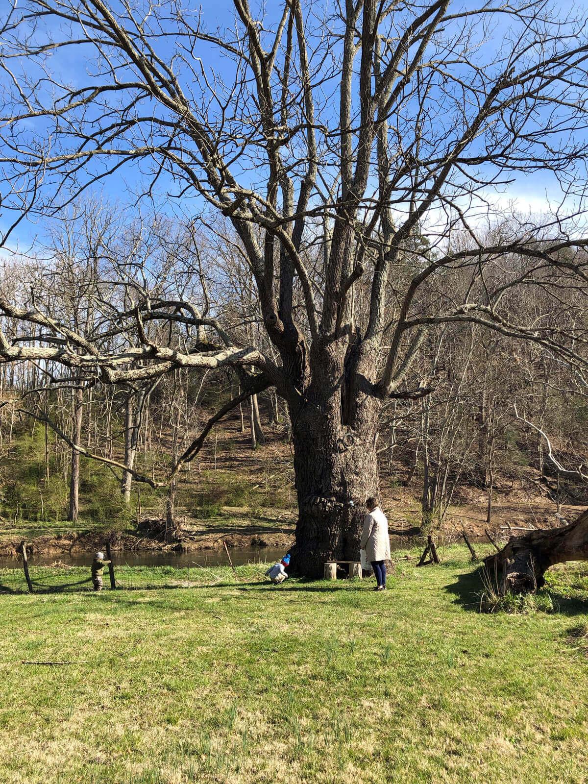 photo of Patti Jones on her family's farm with the black walnut tree